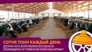 Голышмановский район - лидер по производству молока в Тюменской области