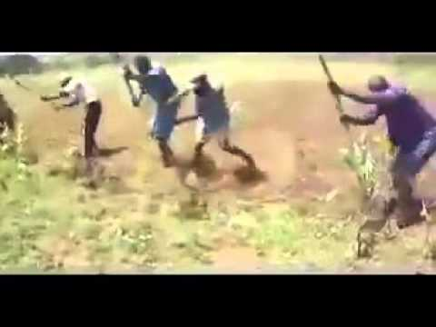 Happy African workers dance in the field
