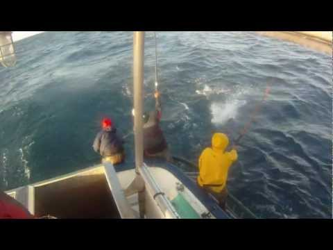 Tuna Fishing Commercial Lift Pole And Unload Of 15 Tons