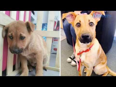 Dogs That Love Life Again After Being Adopted