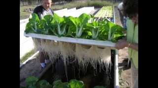 Indoor Aquaponics Systems Do-It-Yourself Training - Aquaponics4u