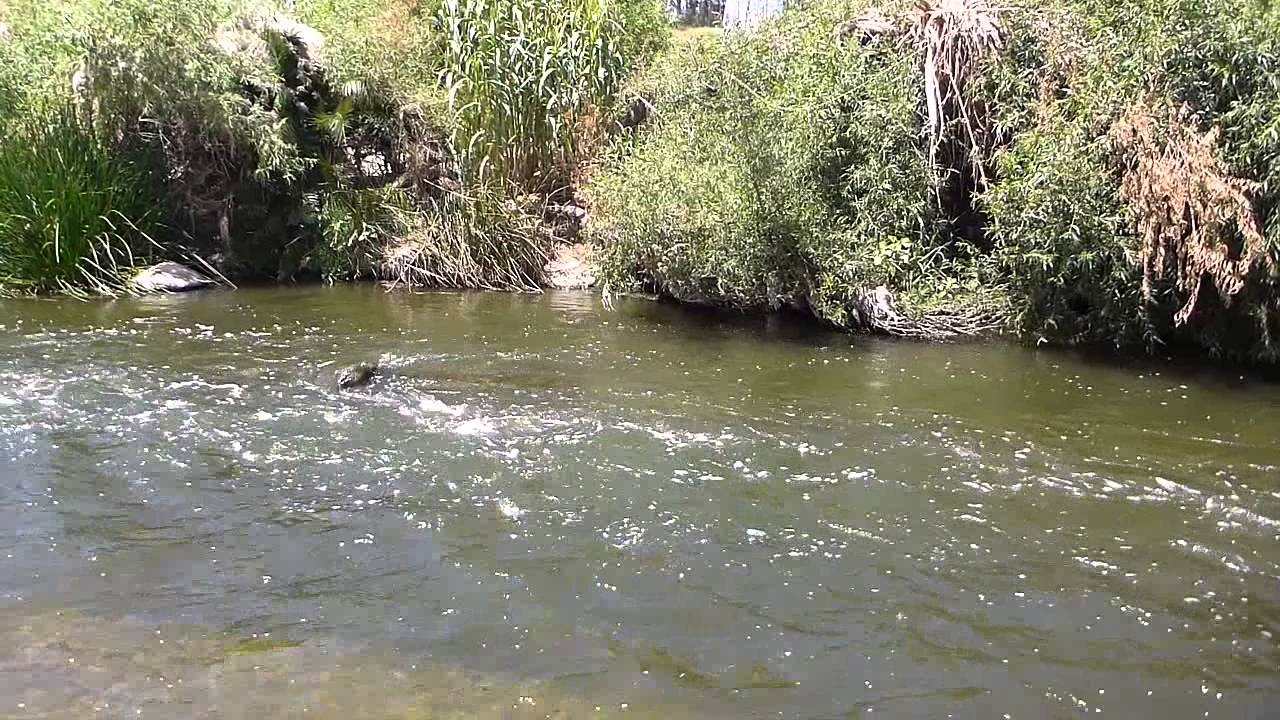 Fly fishing for carp in the los angeles river youtube for Fishing los angeles