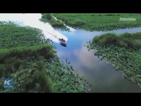 Amazing aerial view of sea of lotus in central China's Henan