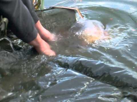 CARP FISHING WHELFORD POOLS FAIRFORD