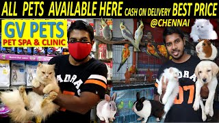 PET SHOP IN CHENNAI TAMIL/DOG SALE TAMIL/BIRD,RABBIT,PERSIAN CAT,GUINEAPIG FOR SALE IN CHENNAI TAMIL