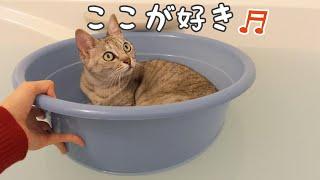お風呂が好きすぎて動かない猫