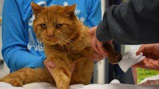 На крыльцо дома пришёл странный кот, он прятал передние лапы , люди не могли понять что с ним
