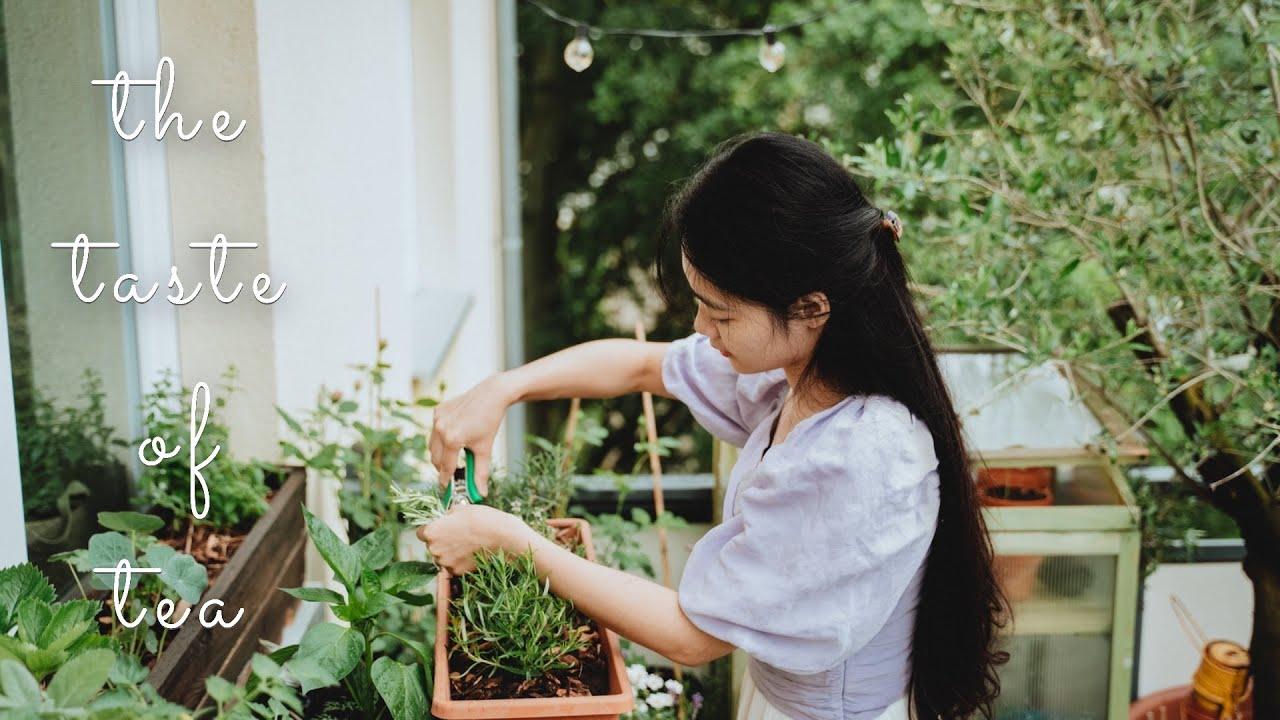 #47 Homegrown Herbal Tea Recipes for Better Sleep 🍵