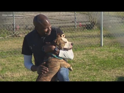 83 animals adopted from Harris County Animal Shelter