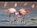 Download Kero Kero Bonito - Flamingo (EARRAPE) PART 4