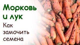 Как замочить семена лука и моркови(Раасскажу и объясню как не пропустить время раннего посева лука и моркови. Покажу как правильно провести..., 2015-03-12T21:24:14.000Z)