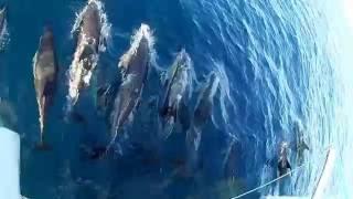 Catamaran Ohana Delivery 1/2