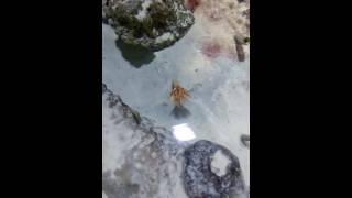Какие-то волшебные морские черви и Лиза)))