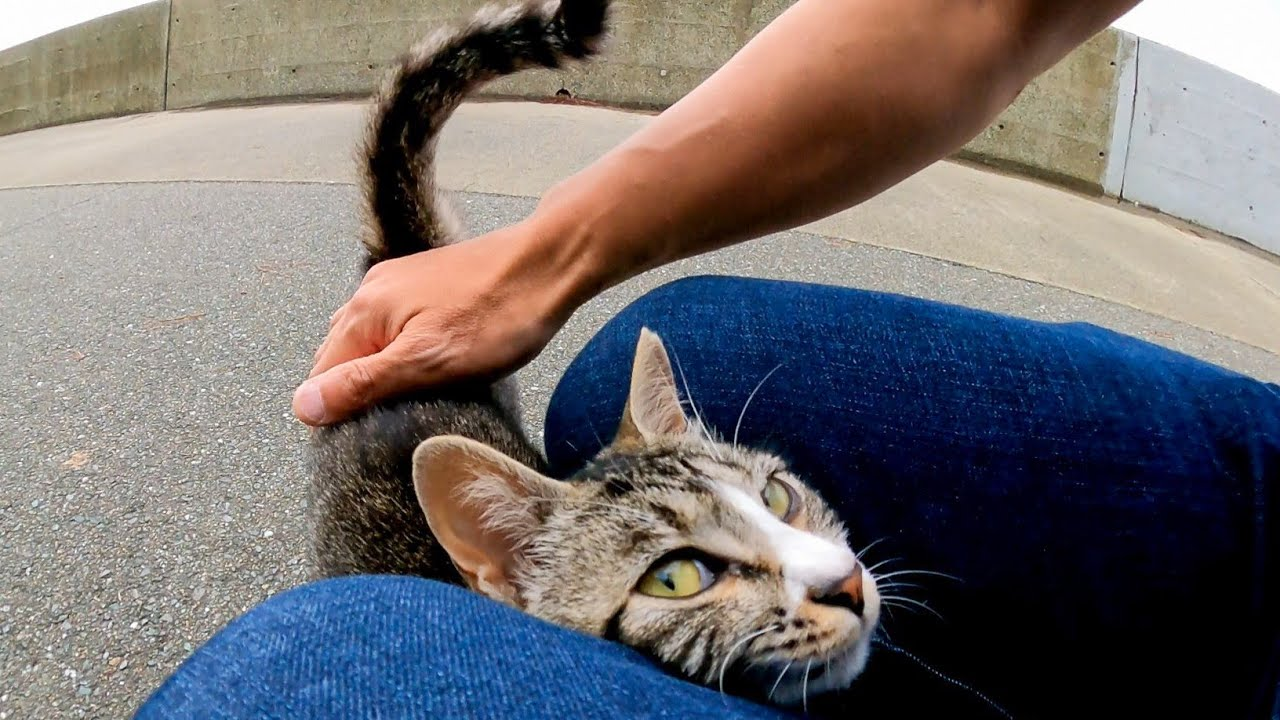 海沿いの道でメチャメチャ人懐っこい野良猫に出会った