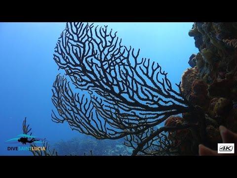 Diving Fairy land with DiveSaintLucia - Saint Lucia