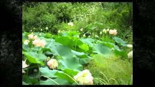 Chanticleer Pleasure Garden