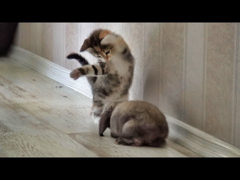 Cat meeting a bunny - funniest video ever
