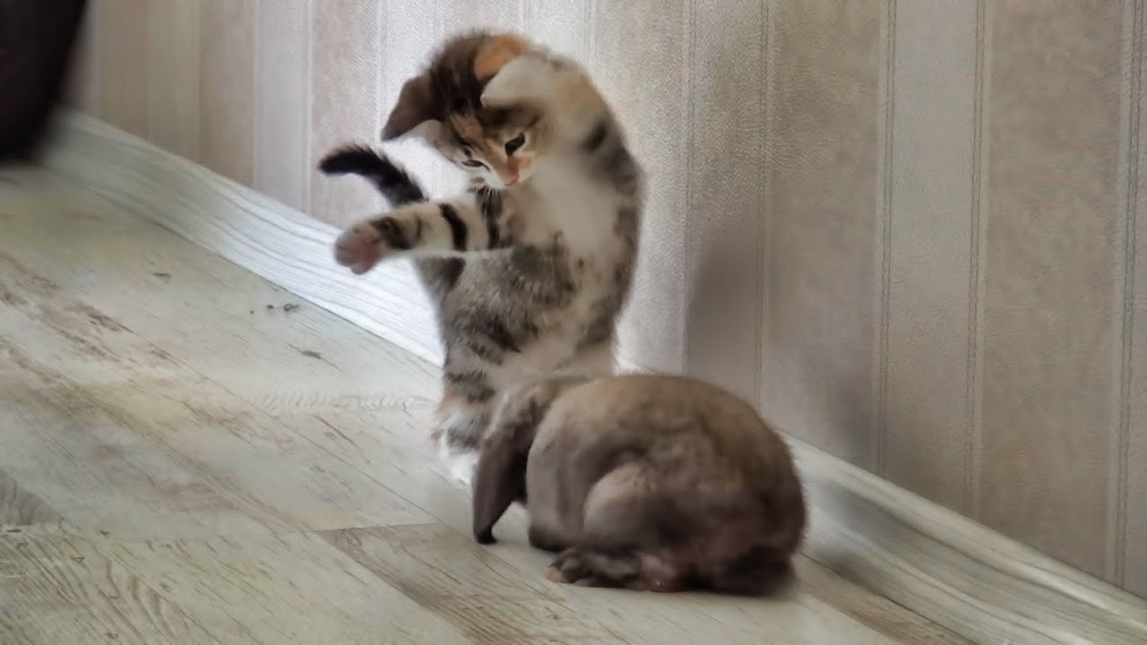 Funny rabbit funny rabbit pictures pictures of rabbits funny - Funny Rabbit Funny Rabbit Pictures Pictures Of Rabbits Funny 32
