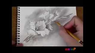 Рисуем гладиолус простым карандашом(Демонстрация к уроку по рисованию цветка гладиолуса простым карандашом: http://aniop.ru/gladiolus/, 2014-04-17T07:14:28.000Z)