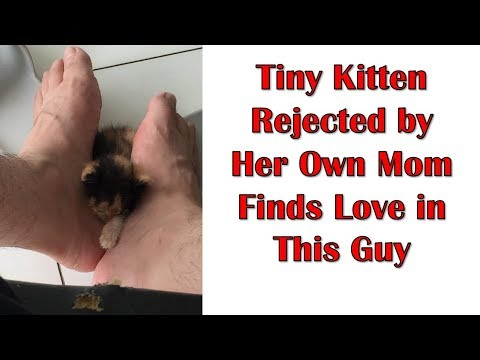 Tiny Kitten Rejected By Her Own Mom Finds Love In This Guy