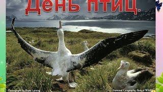 """Презентация для детей """"День птиц"""""""