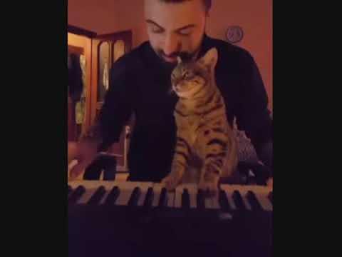 kucing romantis bersama majikannya dan aksi lucunya