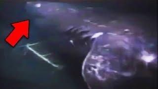 13 Megalodon Shark Sightings Caught on Tape