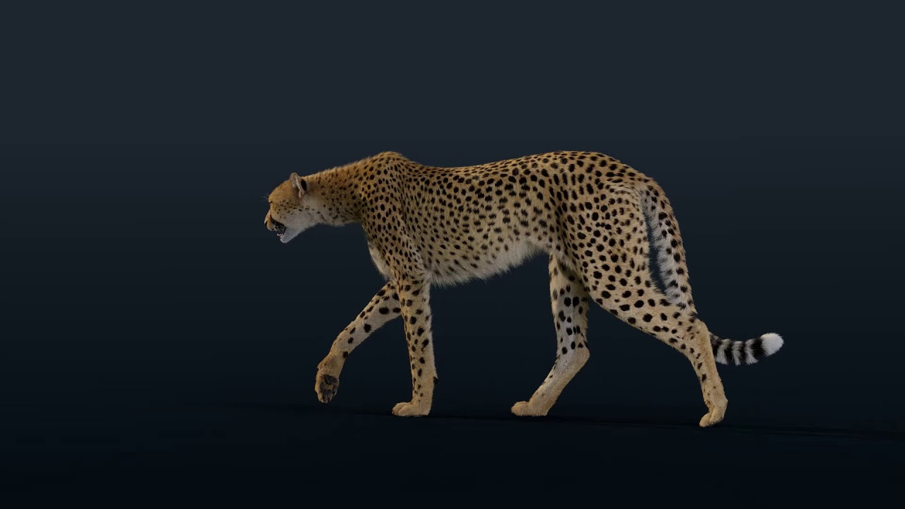 Cheetah 3D Model(Animated Furry) | Blender 3D | VFX  Grace