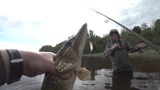 ВОТ ЭТО РЫБАЛКА Ловля Щуки Окуня МОЩНОГО Жереха на спиннинг Рыбалка 2020 на Волге в ЗАБРОД