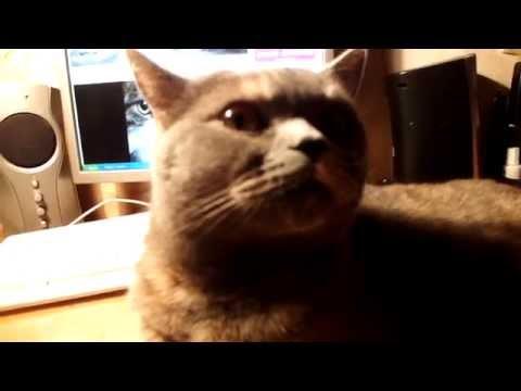 Ученые впервые создали специальную музыку для кошек. Включила вот своей...