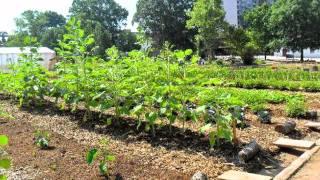 Truly Living Well Wheat Street Garden