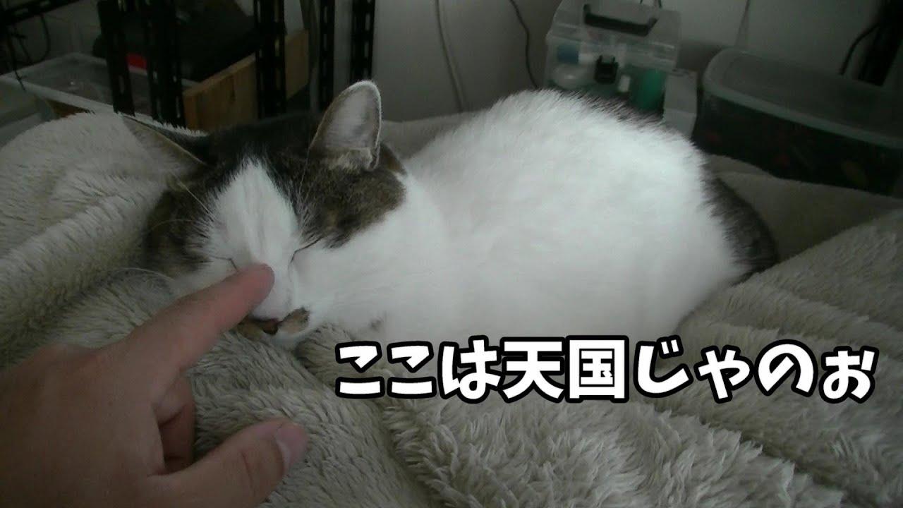 寒すぎて飼主湯たんぽから離れたくない猫