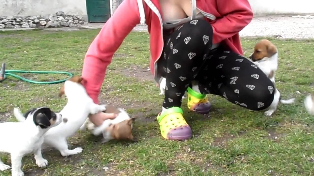 Hundeattacke