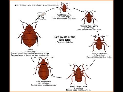 Bed Bug Secrets NJ Bites and Rash 732-309-4209 | Bedbug inspection Mercer County New Jersey