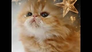 Фото милейших котят/Не похожие