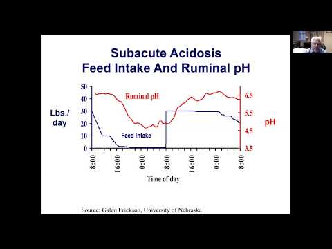 Controlling Acidosis in Feedlot Cattle