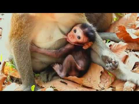 Adorable Moments Of Lovely Kitty Monkey Playing Around, Cute Little One Why Do Like This