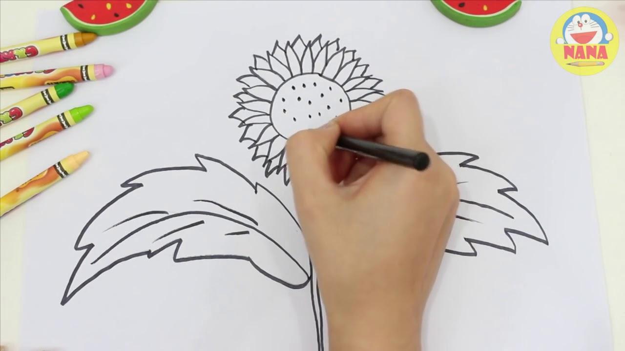 Vẽ tranh tô màu hoa hướng dương   How To Draw SunFlower   Coloring Sun Flower
