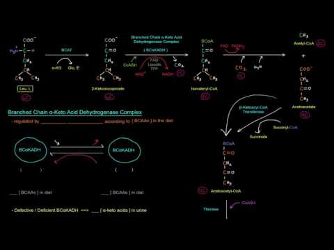 Amino Acid Oxidation Pathways (Part 8 of 10) Branched Chain Amino Acids (BCAAs)