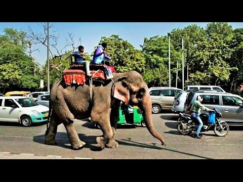 Walking in New Delhi India Street Life Scenes Sights & Sounds People Market