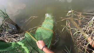 РЫБАЛКА НА УДОЧКУ ЖДУ КЛЕВА КРУПНЫХ КАРПОВ Рыбалка на толстолоба и не больших карпов
