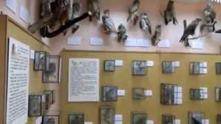 видео Чарующие музеи бабочек в СПб