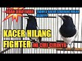 Kacer Hilang Fighter Ini Ciri Cirinya Tips Sebelum Membeli By Dr Kacer  Mp3 - Mp4 Download