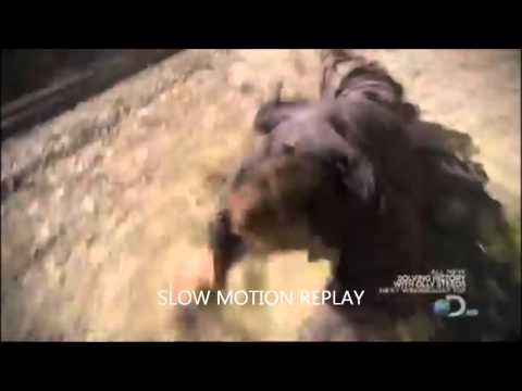 FAKE: bear grylls almost hit by train PROOF IT