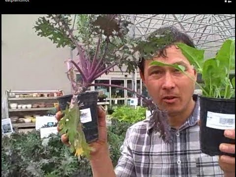 Learn How to Grow Food at Cal Poly Pomona and Buy Low Cost Produce & Plant Starts