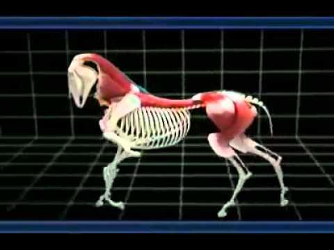 Biomecânica do movimento - YouTube