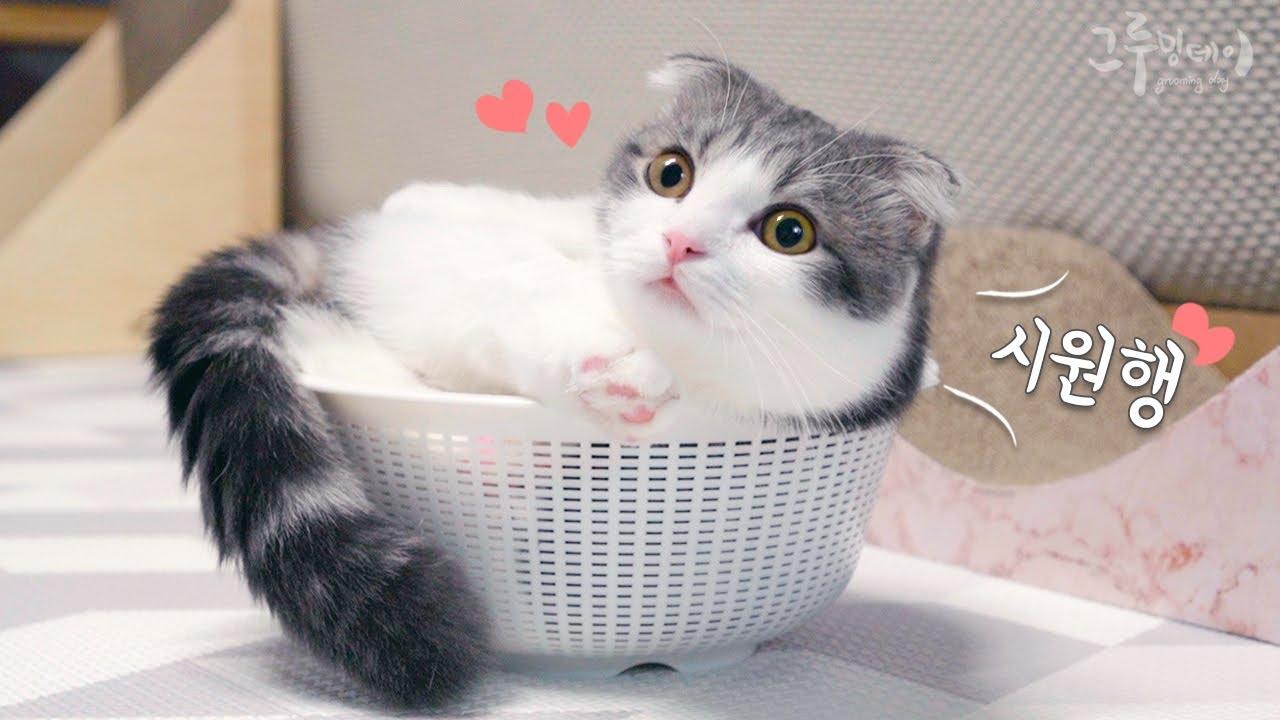 고양이가 좋아하는 여름 바구니 cat vlog
