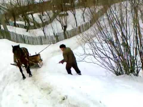 tipic moldovenesc mori de ras
