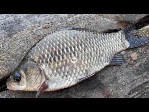 Рыбалка на фидер. Ловля карася на реке. Рыбалка для начинающих. Рыбалка 2021