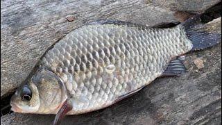 Рыбалка на фидер Ловля карася на реке Рыбалка для начинающих Рыбалка 2021